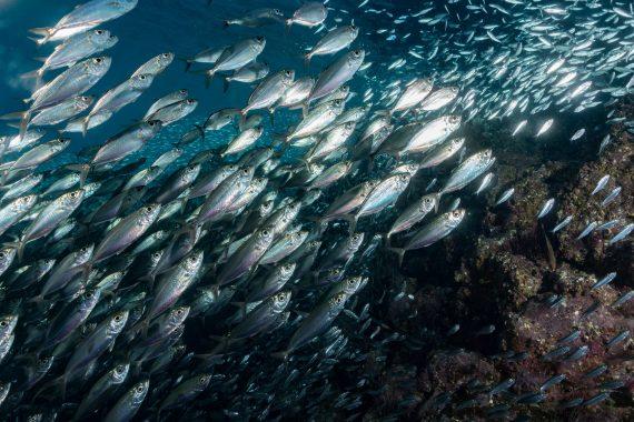 Połowy ryb
