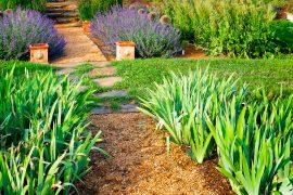 Ścieżka w ogrodzie