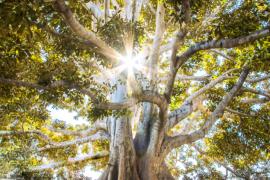 Promienie słońca w koronie drzewa
