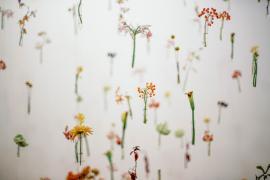 Kwiaty w powietrzu