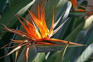 Egzotyczna roślina doniczkowa