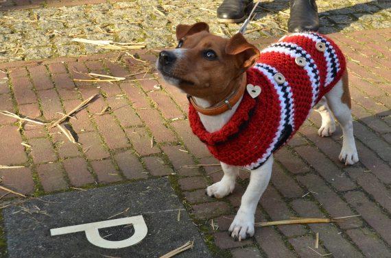 Pies w ubranku