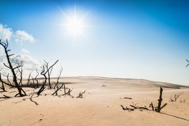 Słońce na pustyni - widok na uschnięte drzewa