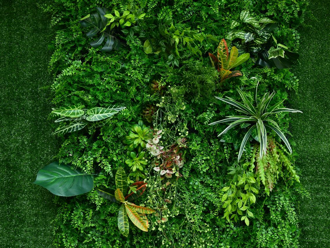 zielona ściana kwiaty rośliny
