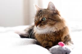 kot zabawka kocimiętka
