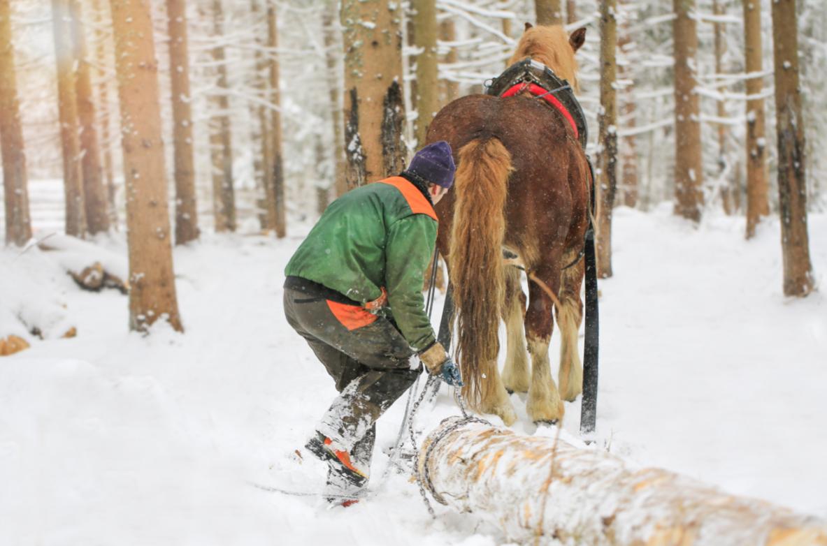 mężczyzna w lesie w górach pracujący przy drewnie z koniem