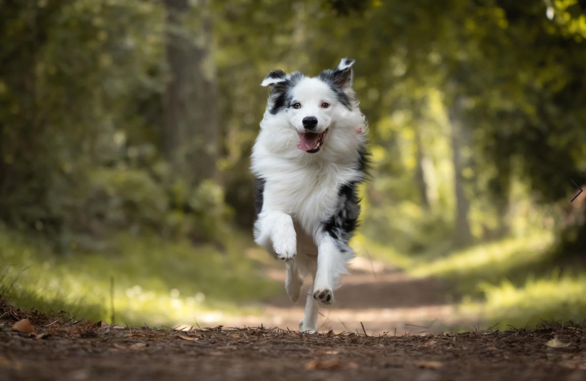 pies piękna sierść