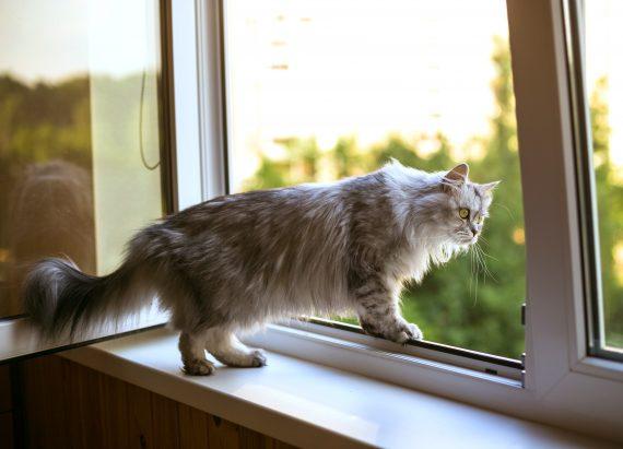 kot wyglądający przez niezabezpieczone okno
