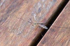 komar na ławce